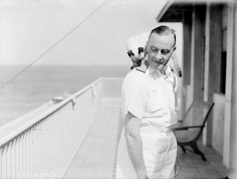 Admiral Sir James Somerville, KCB, KBE, DSO, allowing Prince Chang, his pet Siamese cat to play with his epaulet.