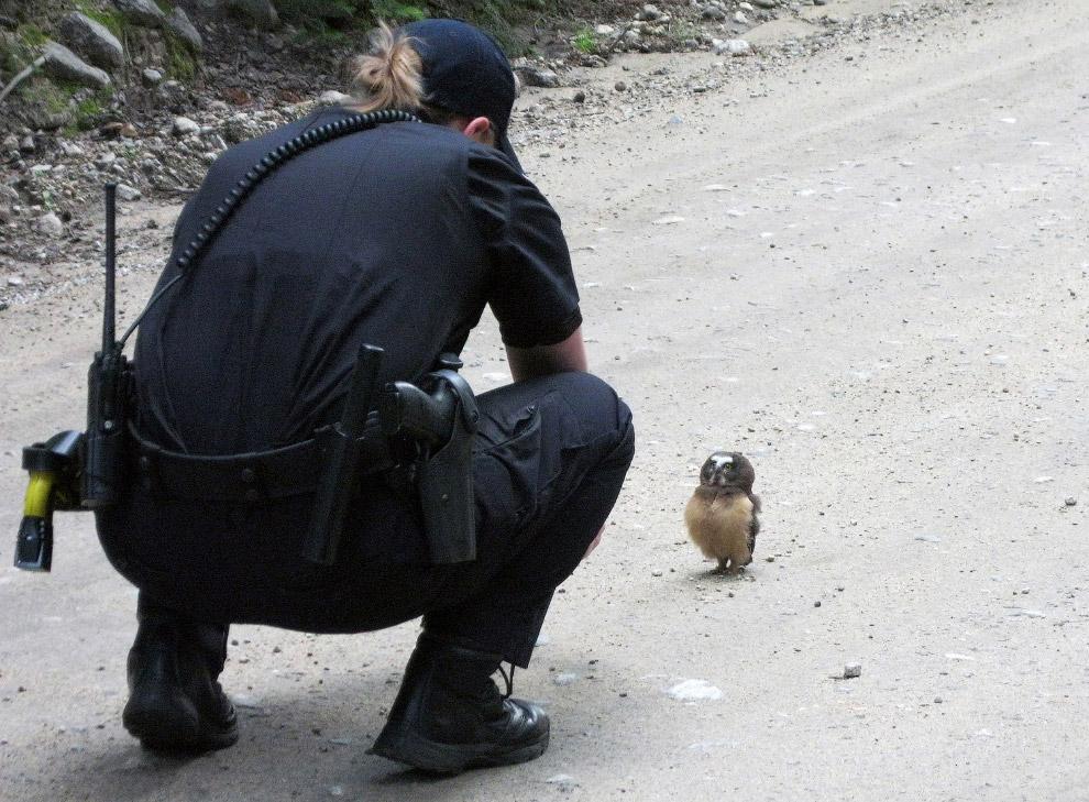 16. Как-будто в очках. Так и есть, это очковая сова. (Фото Andrew Cowie):