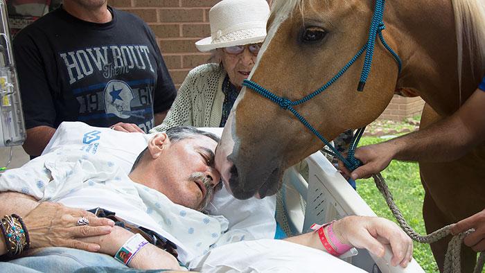 Умирающий вьетнамский ветеринар попросил в последний раз встретиться с любимыми лошадьми за пределам