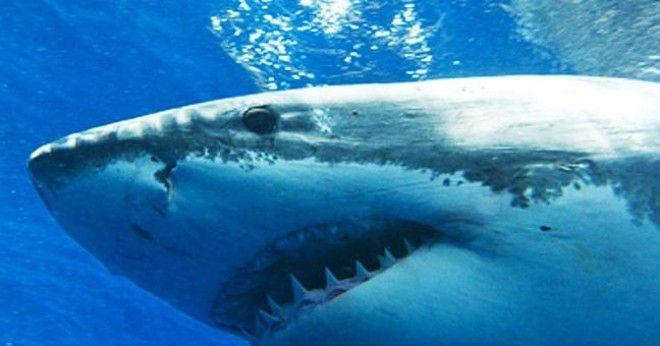 Несмотря на различные эксперименты и доводы специалистов, многие люди до сих пор верят, что акулий х