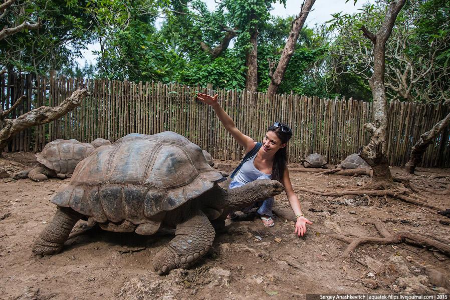 5. Призонские черепахи очень дружелюбны и любопытны. За десятки лет они привыкли к людям и сове