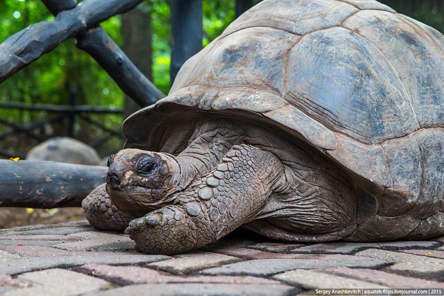 8. Кстати, если будете снимать этих черепах на Призоне, будьте внимательны. Черепахи очень любо