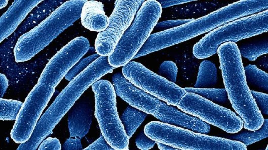 У12 бактерий обнаружилась невосприимчивость кантибиотикам