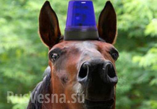 ВКиеве конная милиция сбила женщину