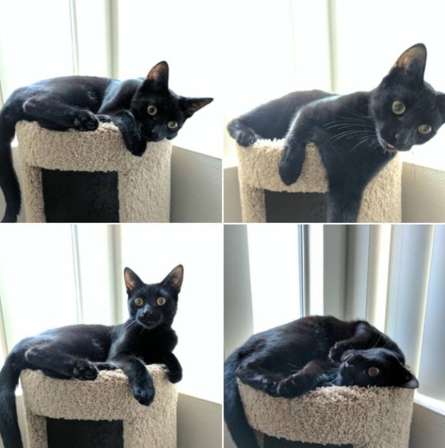 Чёрная кошка — это маленькая пантера