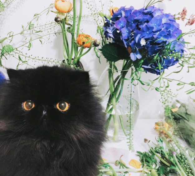 Дарите кошечкам цветы!