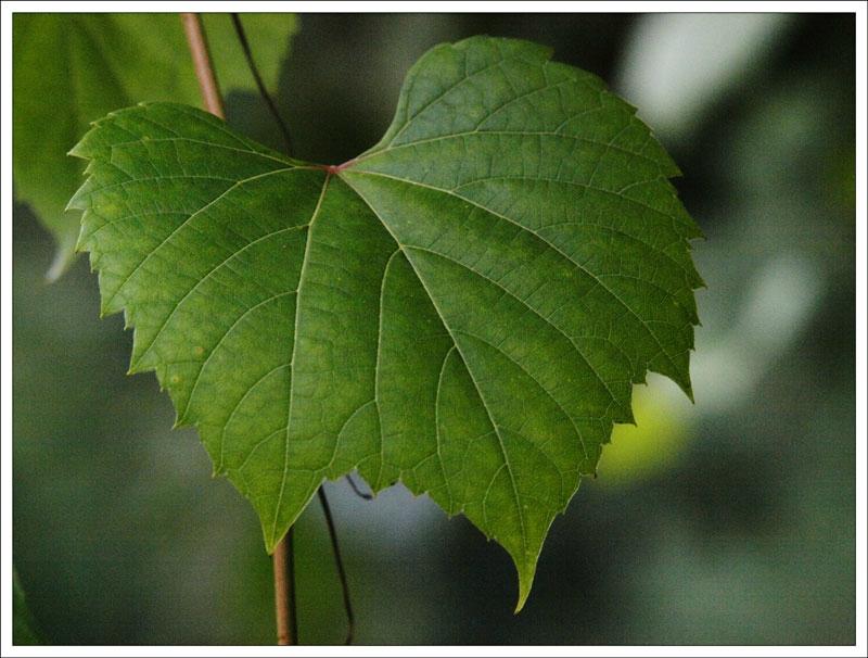 127_Leaf.jpg