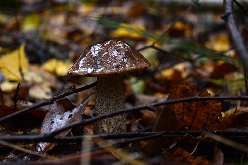 грибной мир 16 дождь.jpg