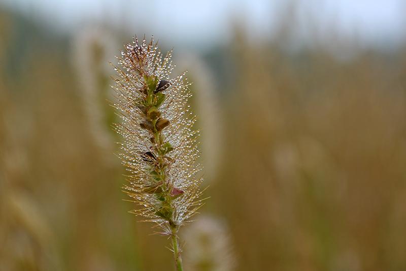 капельки трава 14.jpg