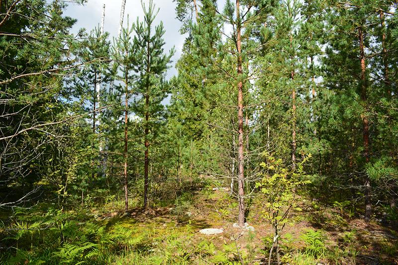солнечный лес 16 3.jpg