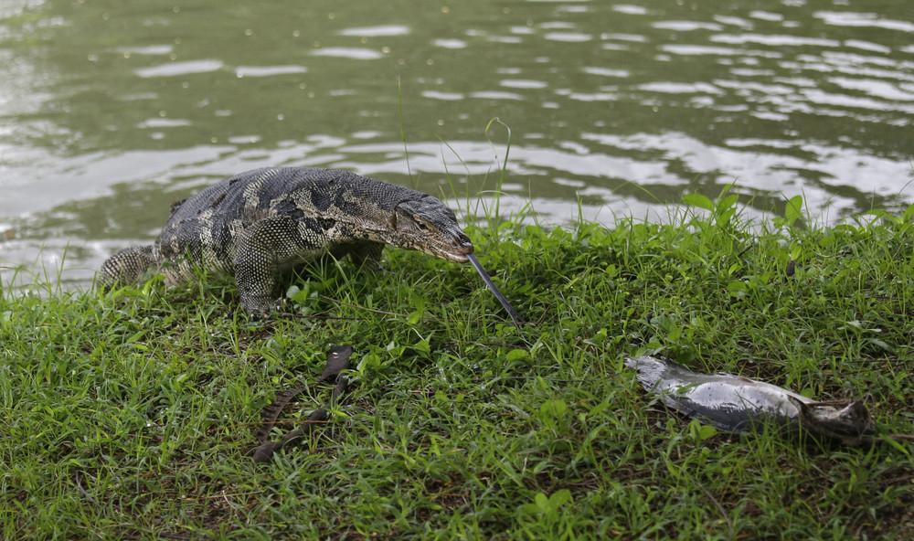 Парк варанов в Бангкоке