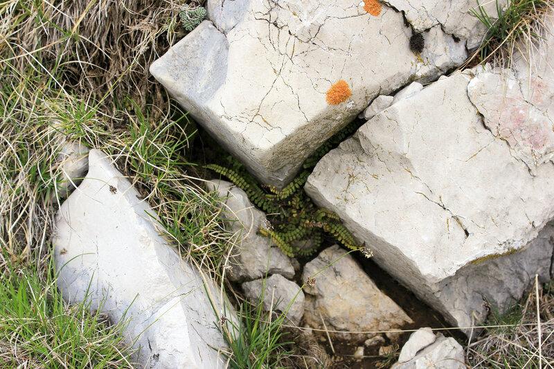 Плющ затесался между камней