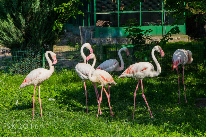 kharkiv_zoo-85.jpg