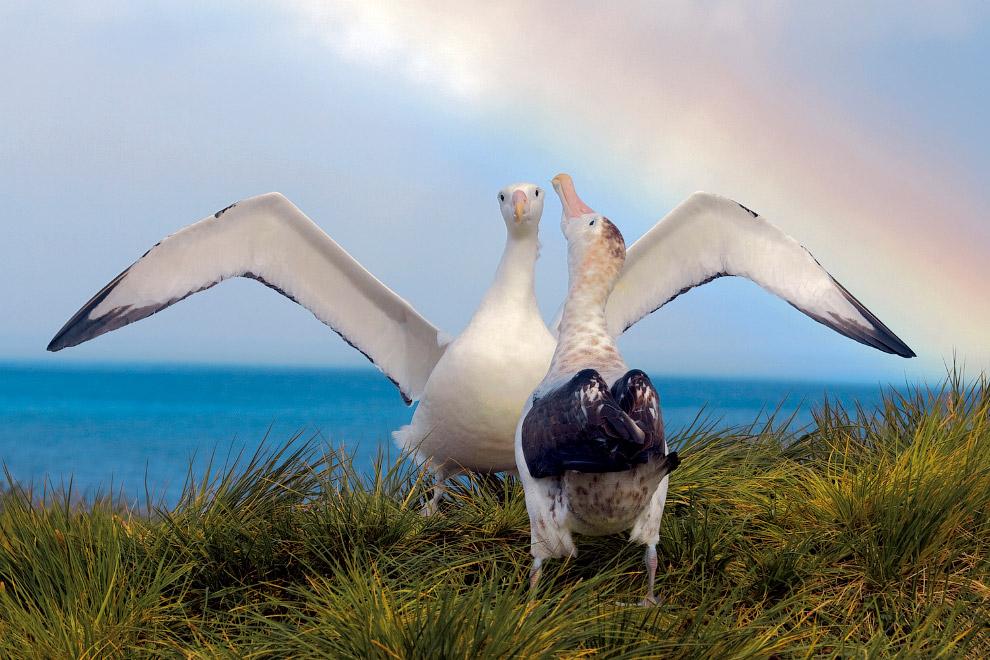 15. Пингвины на льдине.