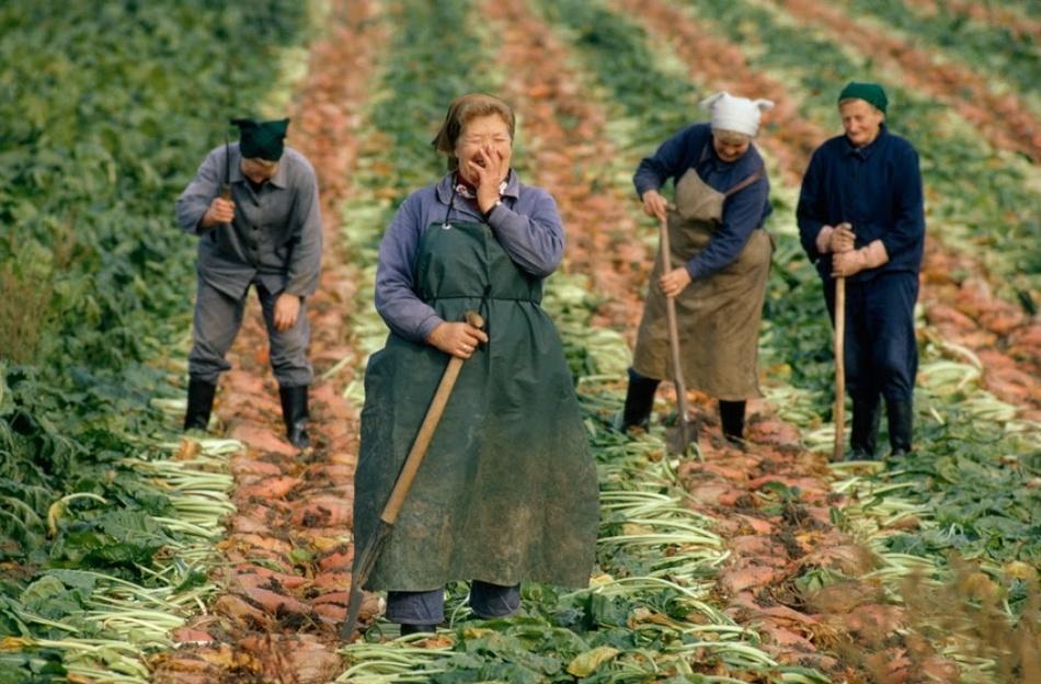 Причудливые узоры на ферме, Висконсин
