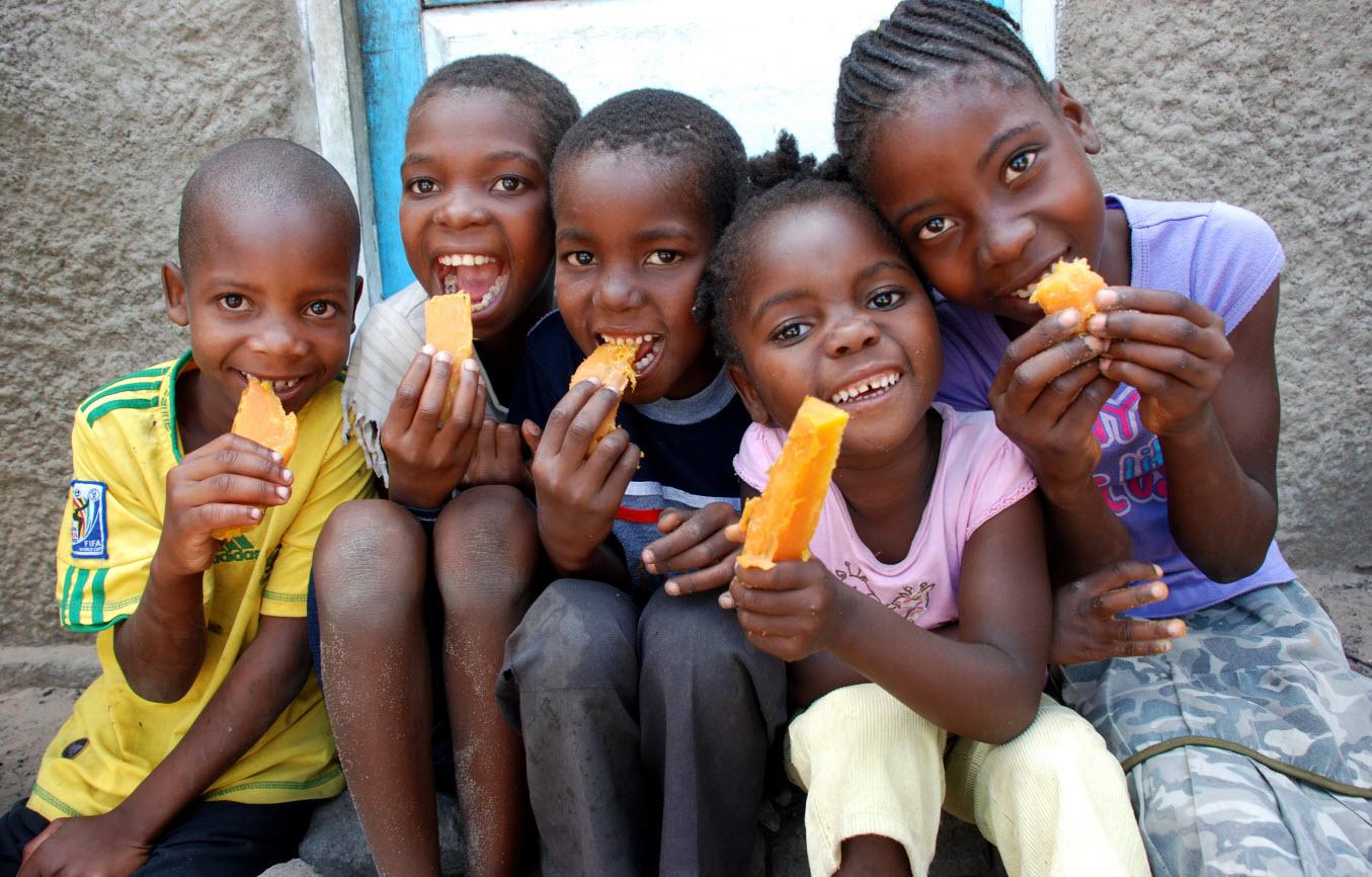 14. Оранжевый сладкий картофель, специально выведенный для выращивания в африканских странах, где де