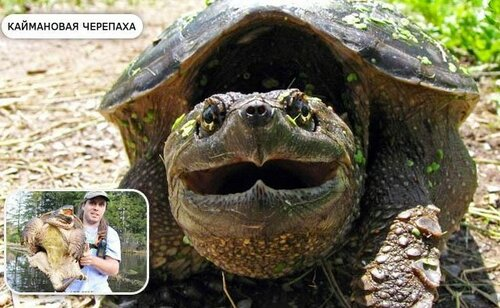 Факты о черепахах