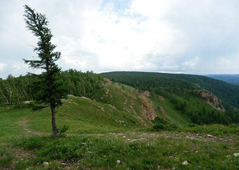 Пейзаж с лиственницей.JPG