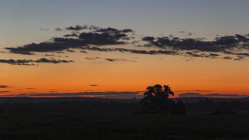 Почти африканский закат: тёмно-оранжевое небо, почти черные облака и силуэты деревьев