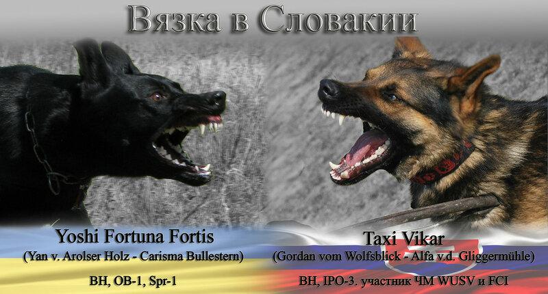 Taxi Vikar & Yoshi Fortuna Fortis 0_cfcbf_bdb7c9b7_XL