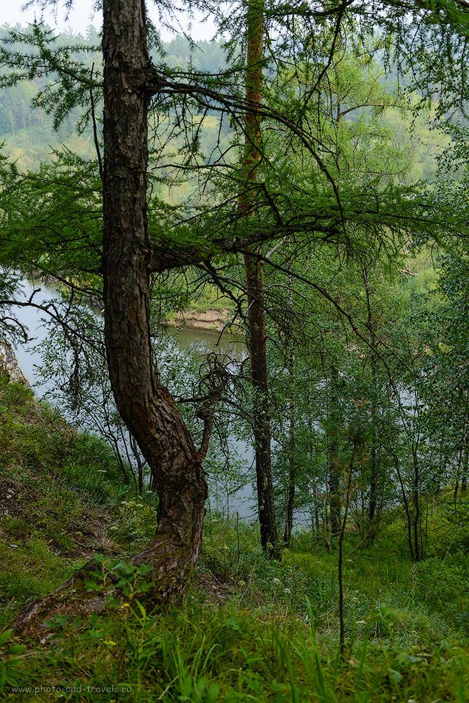 Фотография 31. Лиственница на скале у берега реки Серга. Куда поехать на выходные из Екатеринбурга. 1/250, -1.0, 4.0, 250, 34.