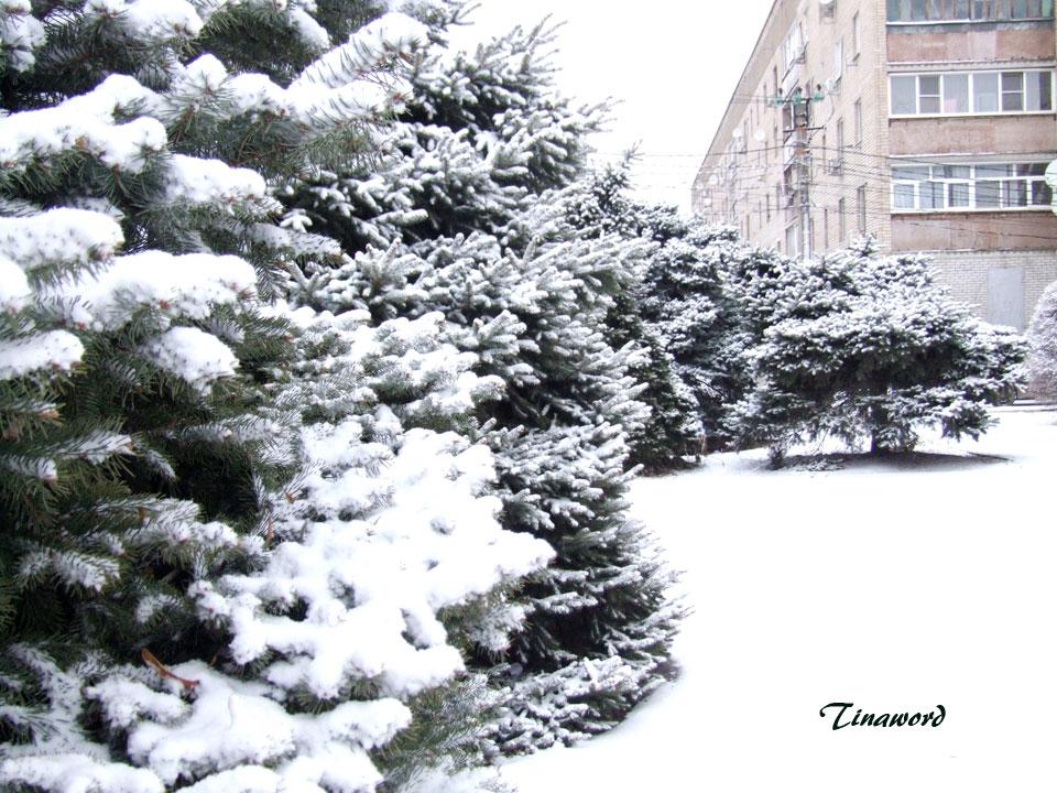 Вот-и-снег-04.jpg