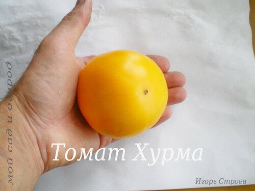 Томат Хурма.