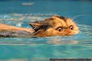 https://img-fotki.yandex.ru/get/97201/194408087.13/0_136b82_3624649_M.jpg