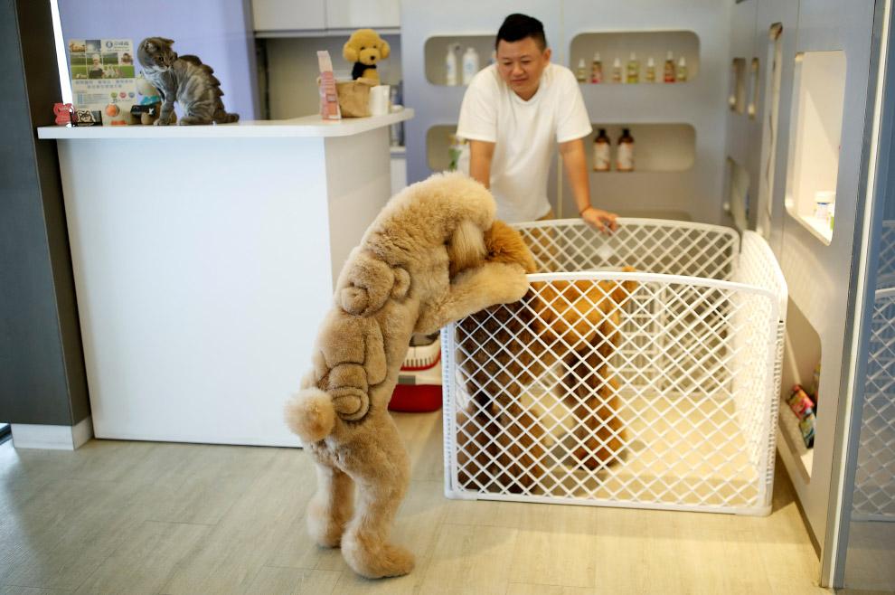Что такое «груминг»? Парикмахер для животных и забавные фотографии животных со стрижкой