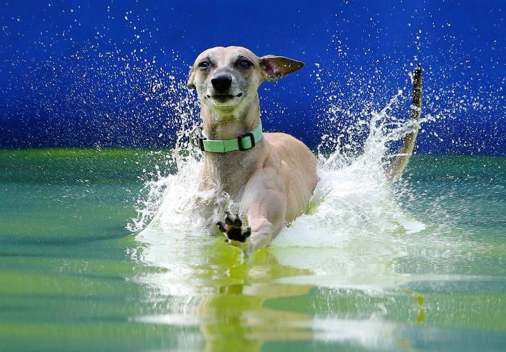 Конкурс летающих собак