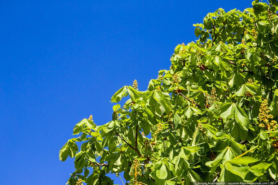33. На Приморском бульваре в этом году настоящий тюльпановый рай и это очень красиво! Кто-то ру