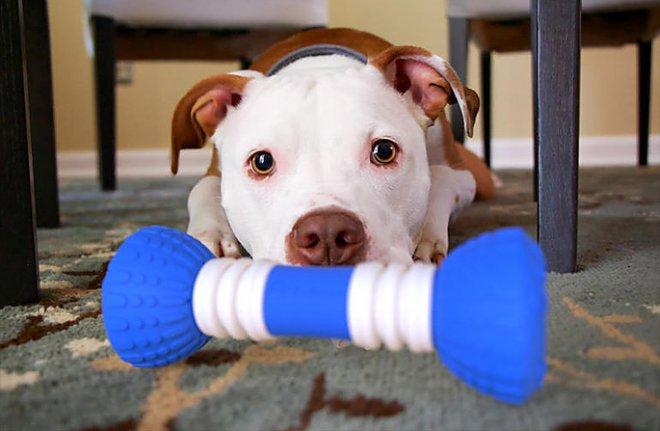 Не секрет, что зачастую собаки остаются дома одни. Чтобы скрасить их одиночество, компания PulsePet
