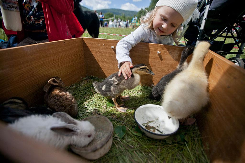 А еще можно было выбрать себе молодую утку и съесть. Шутка. Утят только гладить можно.