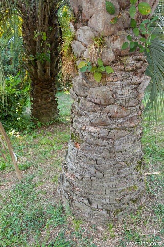 Стволы пальм