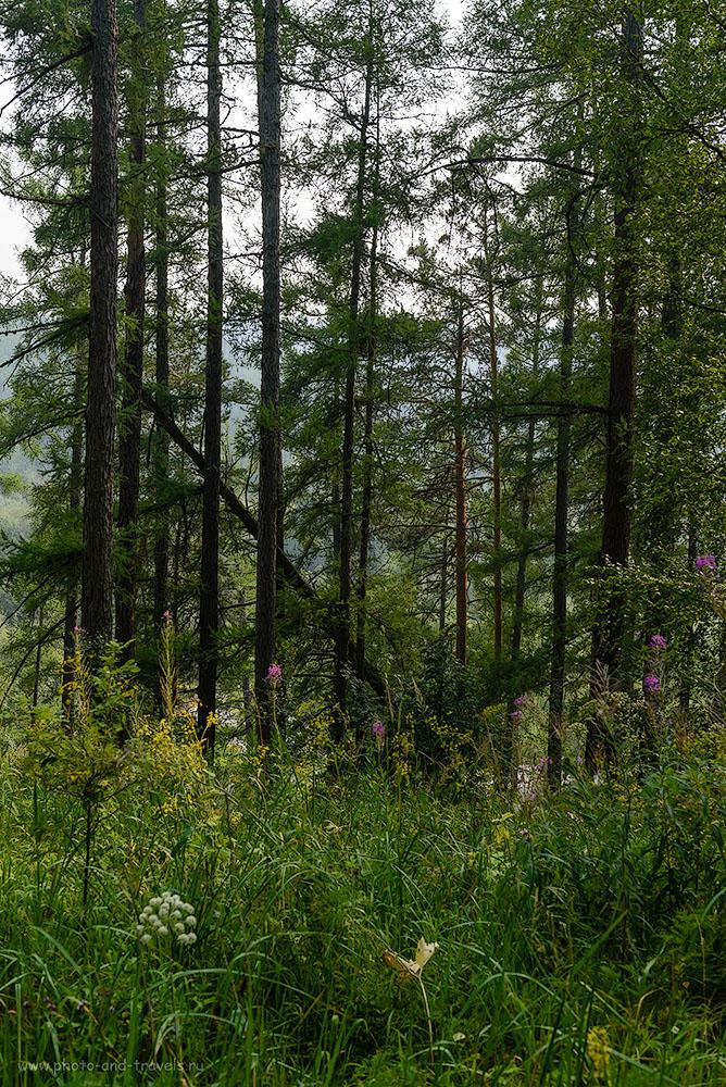 Фото 16. Лес в парке «Оленьи ручьи». Куда поехать из Екатеринбурга на авто. 1/200, -1.33, 8.0, 250, 44.