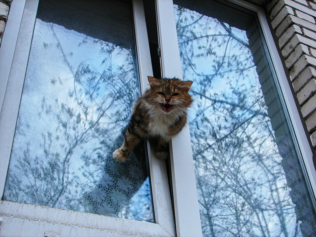 актриса сих коты в окне застряли водолазов