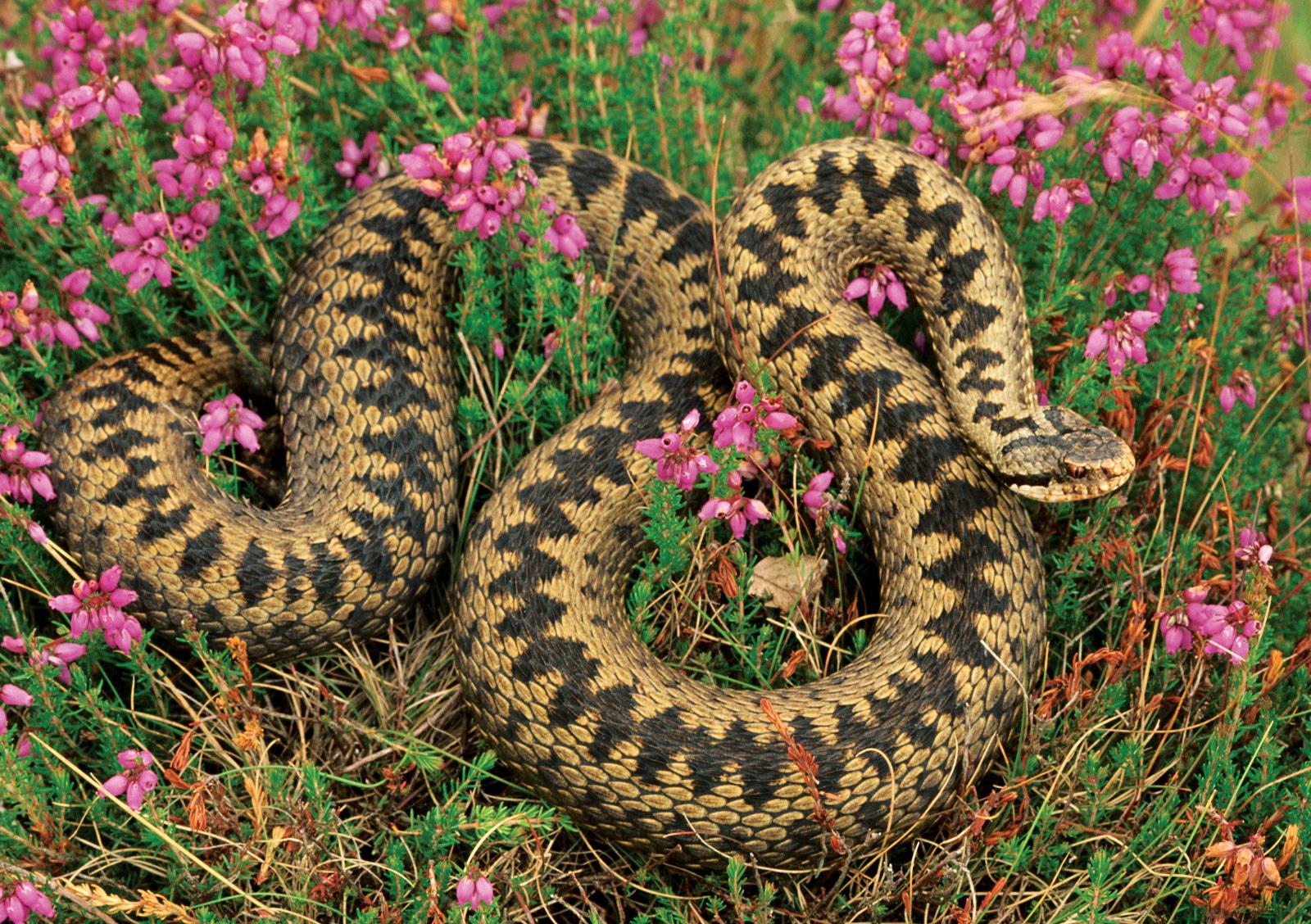 Змія в кольорах