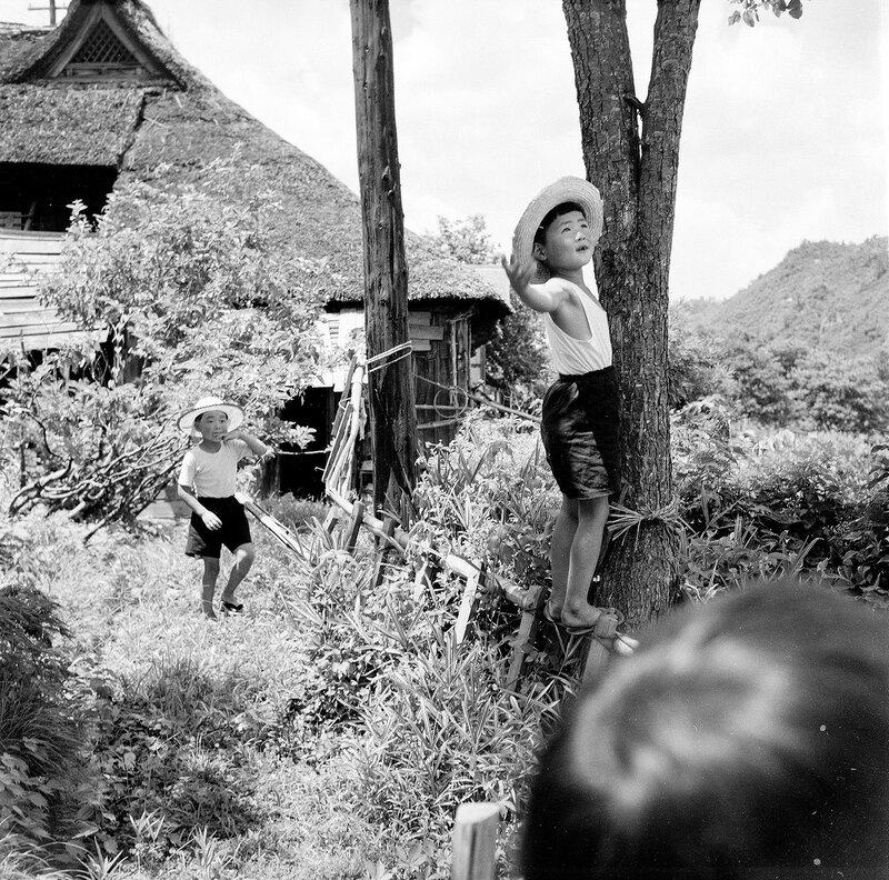 Boys in Hats & Tree - 1950s Japan
