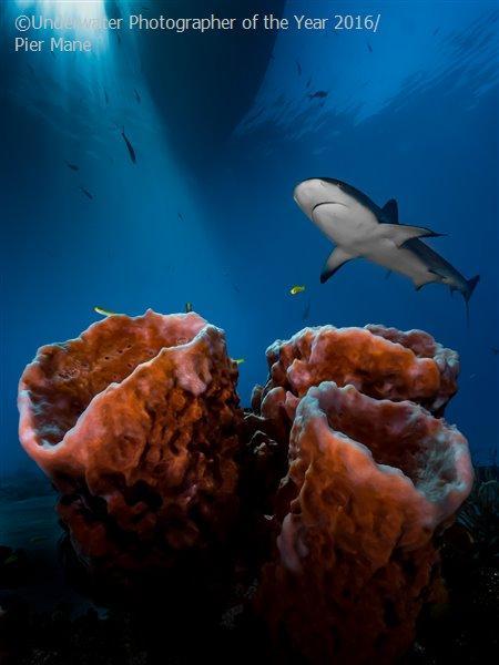 3. Пирс Мане из ЮАР был назван «Самым перспективным подводным фотографом года» за фото «Три кита», с