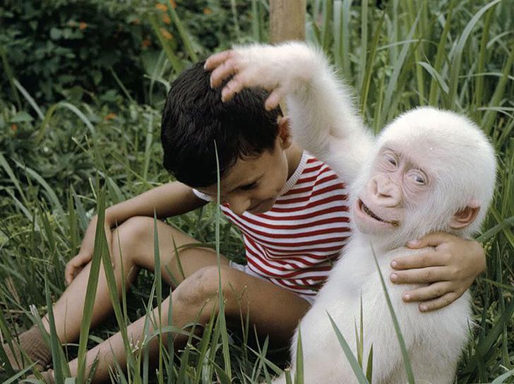 Капризы природы: животные-альбиносы (20 фото)