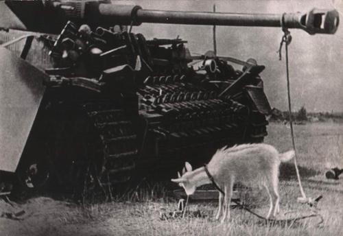 Военный корреспондент Дитлов А. С. Великая Отечественная война