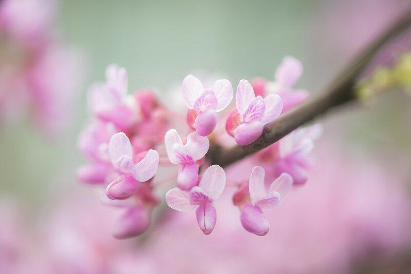 Зефирная весна
