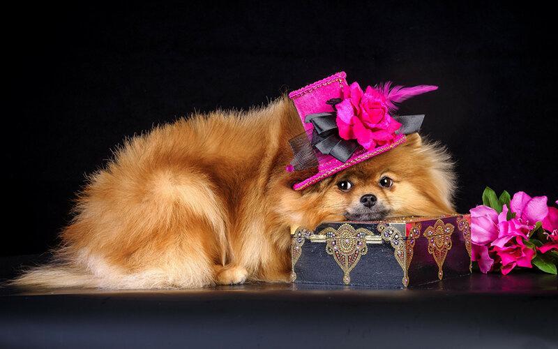 Красивая картинка с собачкой ко дню рождения