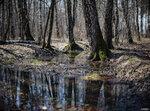 лесной апрель 2018