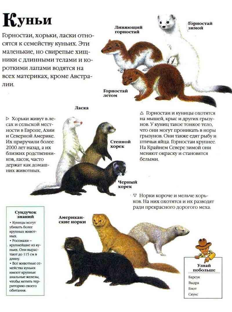 Презентация на тему Животные Красной Книги Татарстана