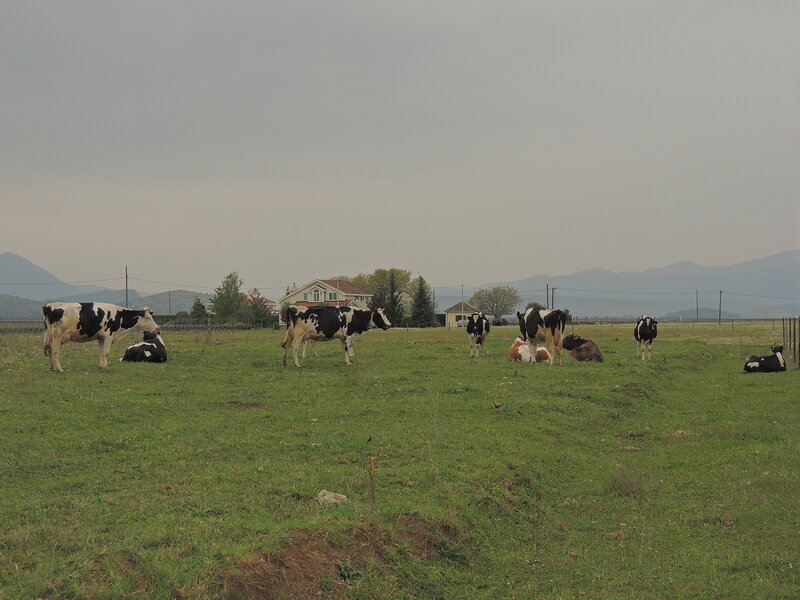Черногория, 5 апреля 2014