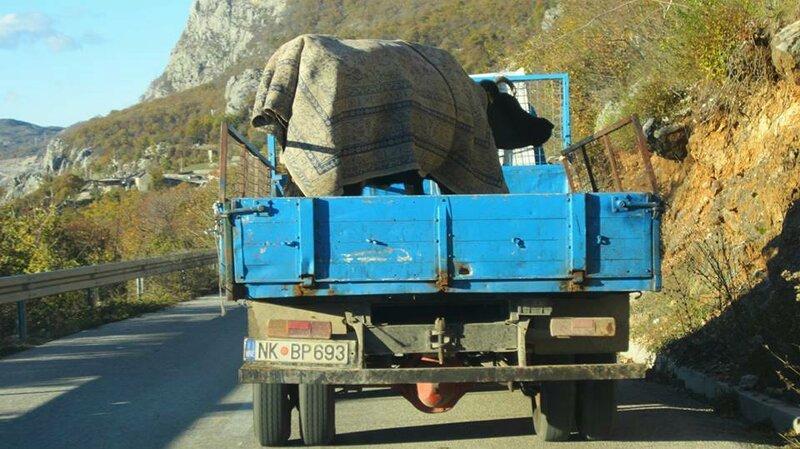 Жизнь животных в Черногории