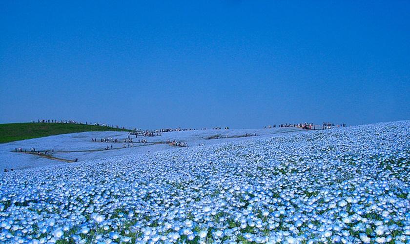 Живописный японский парк Хитати Кайхин 0 1422f6 cb395087 orig