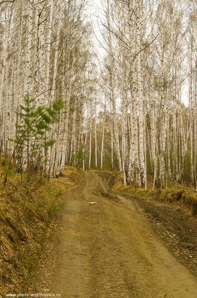 На этом месте должны быть фотография горы Аракульский Шихан... Но мы не нашли ее... :) Только два часа прогулялись по такому лесу в Челябинской области... :)