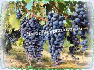 Ягоды и листья винограда